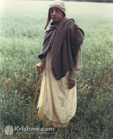 "Srila Prabhupada Photo, Field in France, 8""x10"""