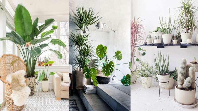 different styles of houseplants