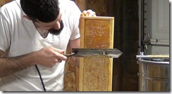 uncapping a comb of honey