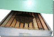 IN-HOUSE Overwintering Your Bees Workshop, Sat., Aug. 8, 2020  1pm - 6 pm
