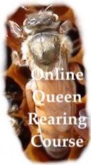 Online Queen Rearing Course- ONLINE