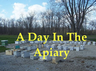 ONLINE  A Day In The Apiary Course
