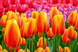 การเลือกดอกไม้ที่มีสีเดียวกันหรือเหมือนกัน