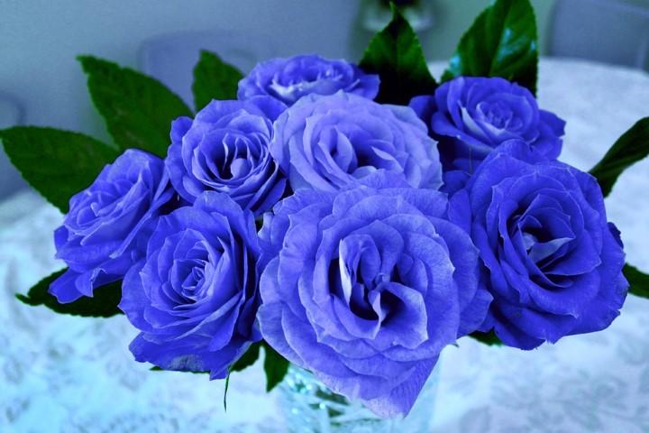 ดอกกุหลาบสีน้ำเงิน ดอกไม้วันวาเลนไทน์ที่สื่อถึงการปฏิเสธความรัก