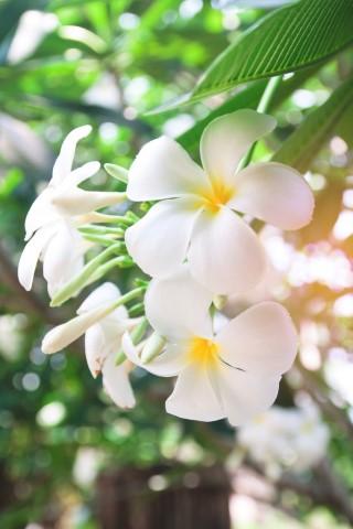 ดอกไม้วันวาเลนไทน์ที่ไม่ควรมอบให้แก่คนรัก