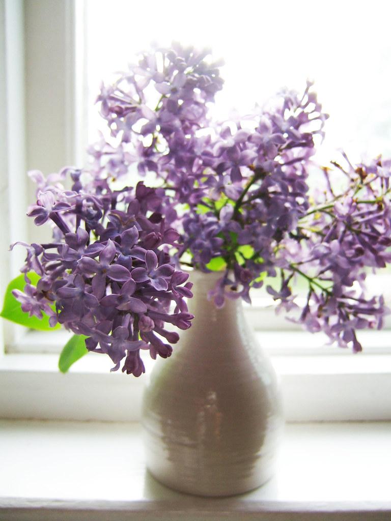 ดอกไลแลค ดอกไม้แห่งความอดทน ความสุข และความหวัง