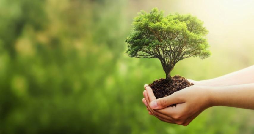 ปลูกต้นไม้ผ่อนคลายความเครียดภายในบ้าน
