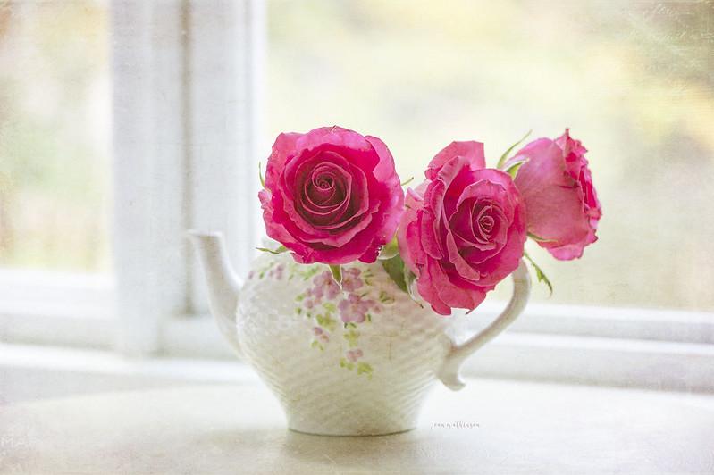 ดอกกุหลาบสีชมพู ดอกไม้แห่งความรัก ข้างหน้าต่าง
