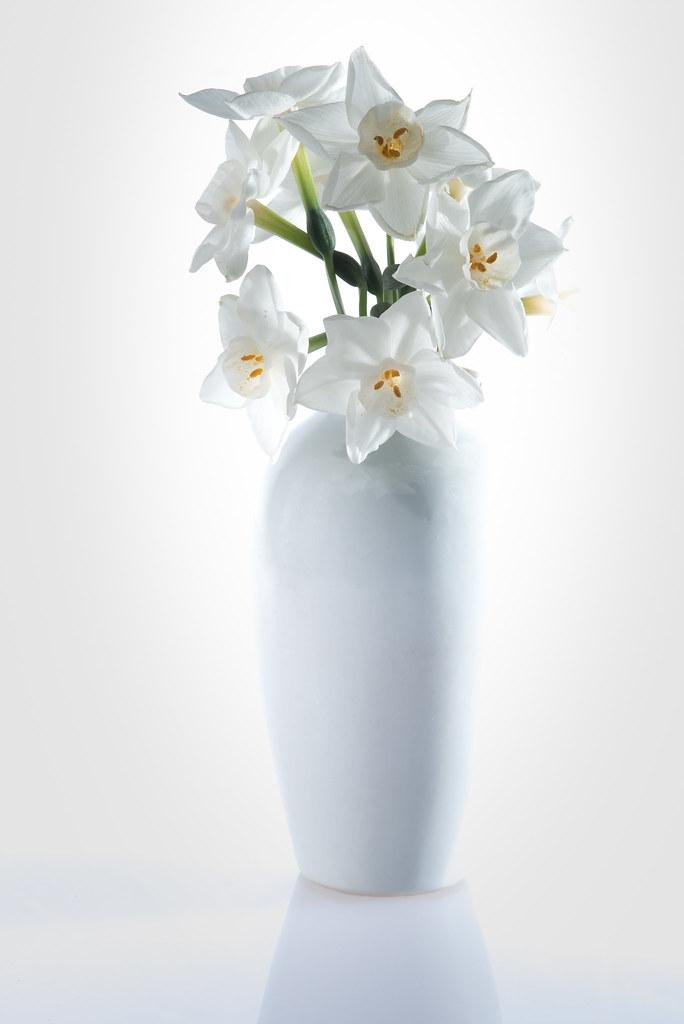 ดอกนาซิสซัส ดอกไม้ส่งเสริมเรื่องการงาน