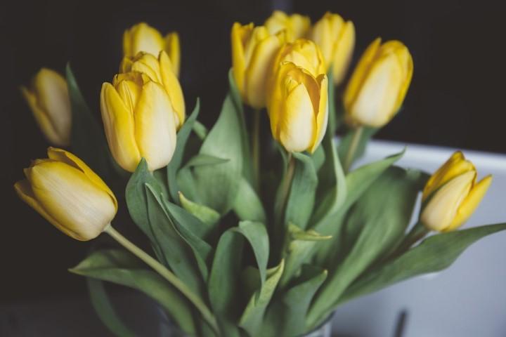 ดอกทิวลิปสีเหลือง ดอกไม้วันวาเลนไทน์ที่สื่อถึงการสิ้นหวังในความรัก
