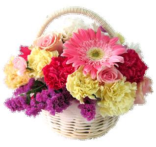 กระเช้าดอกไม้ ขนาดเล็กหลายชนิด