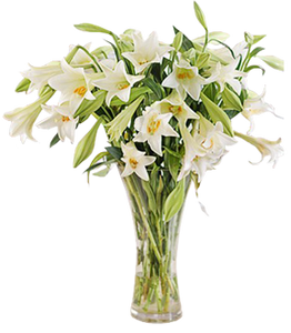 แจกันดอกลิลลี่ขนาดใหญ่สีขาว