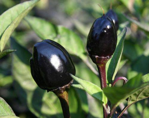 black-olive.jpg