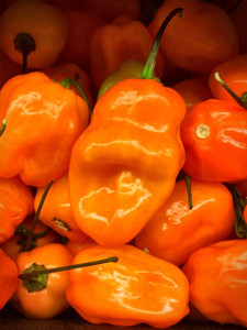 Scotch Bonnet Orange seeds