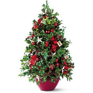 A Christmas traditional gift a lovely boxwood tree decorated with holiday trim.  Decorations may vary as each cut boxwood trees are designed by our talented staff,