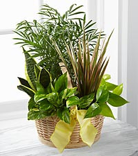 Miniature indoor garden of tropical foliage plants...send for a get well, thinking of you, in sympathy, a nice long lasting gift.