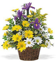 Iris & Daisy Basket Bouquet