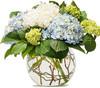 Hydrangea Delight