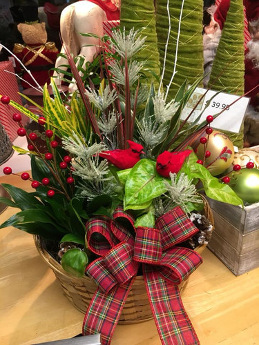 One of our delight holiday garden gifts...
