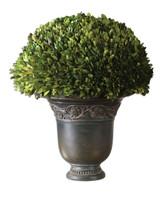 Preserved Boxwood Globe Botanical Plant