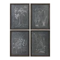 Root Study Print Art S/4