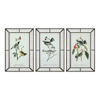 Warblers Bird Prints S/3