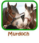 Murdoch Adoption