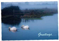 Norfolk Swan Greeting/Birthday Cards