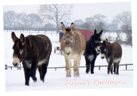 Hillside Horse and Donkey Scene Christmas Cards (X15)