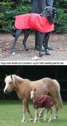 Coat for a Rescued Dog or Foal...