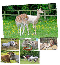 Sanctuary Scenes Greeting Card Selection