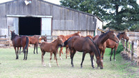 Urgent Thoroughbred Rescue Appeal...