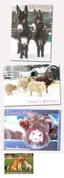 Hillside Sanctuary Christmas Cards