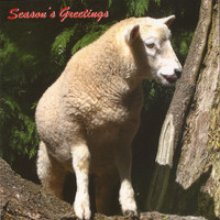 Hillside Sheep Christmas Cards