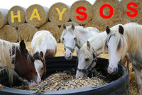 Urgent Hay S.O.S Appeal