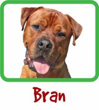 Bran Sponshorship