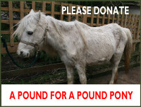 Please Spare a Pound (or Two...) for a Pound Pony (Appeal)...