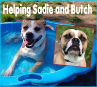 Sadie and Butch Veterinary Appeal...