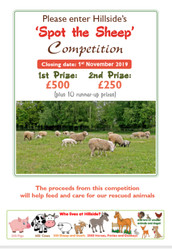 'Spot the Sheep' Competition Entry Form