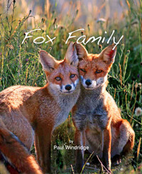 Fox Family - Paul Windridge