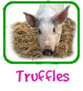 Truffles Adoption