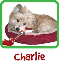 Charlie Sponsorship