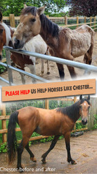Helping Horses like Chester...