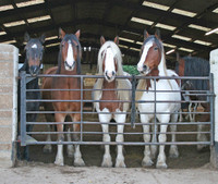 Horse & Cow Barn Building Appeal...