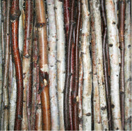 Birch Stick Pack (set of 3)