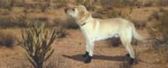 Kevlar Xtreme Boots