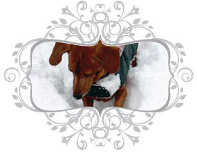 Made in Canada high quality dog coats since 1998