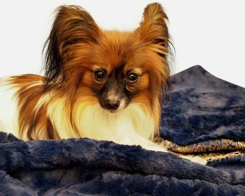 High Quality Faux Fur Dog Blanket