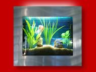 Aussie Aquariums Wall Mounted Aquarium - Square Silver