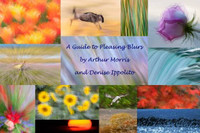A Guide to Pleasing Blurs